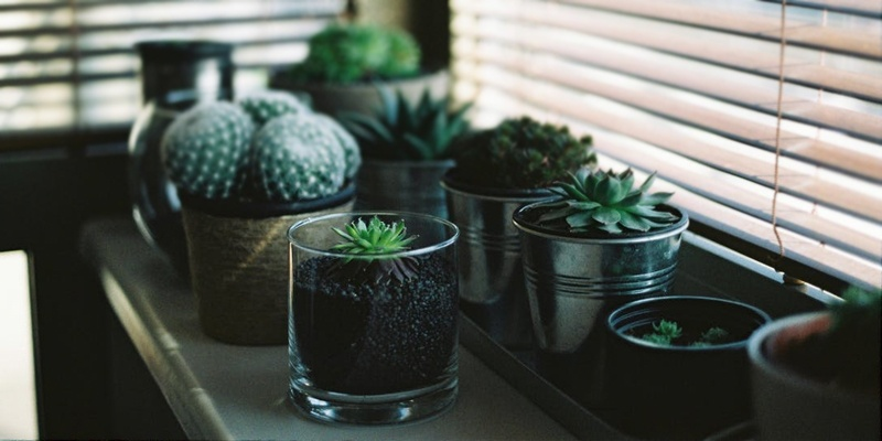 How to Safely Move House Plants