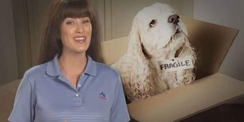 Video Blog: Tips for Moving with Pets